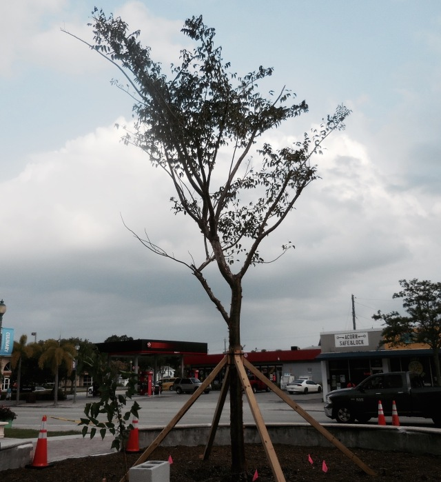 The tree that stands tall and strong  was dedicated to the young man below.